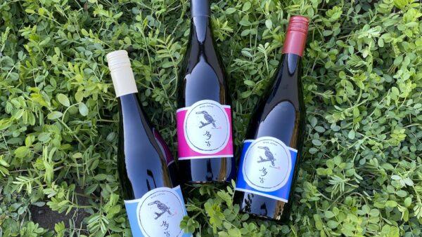 初醸造ワイン出荷始めました
